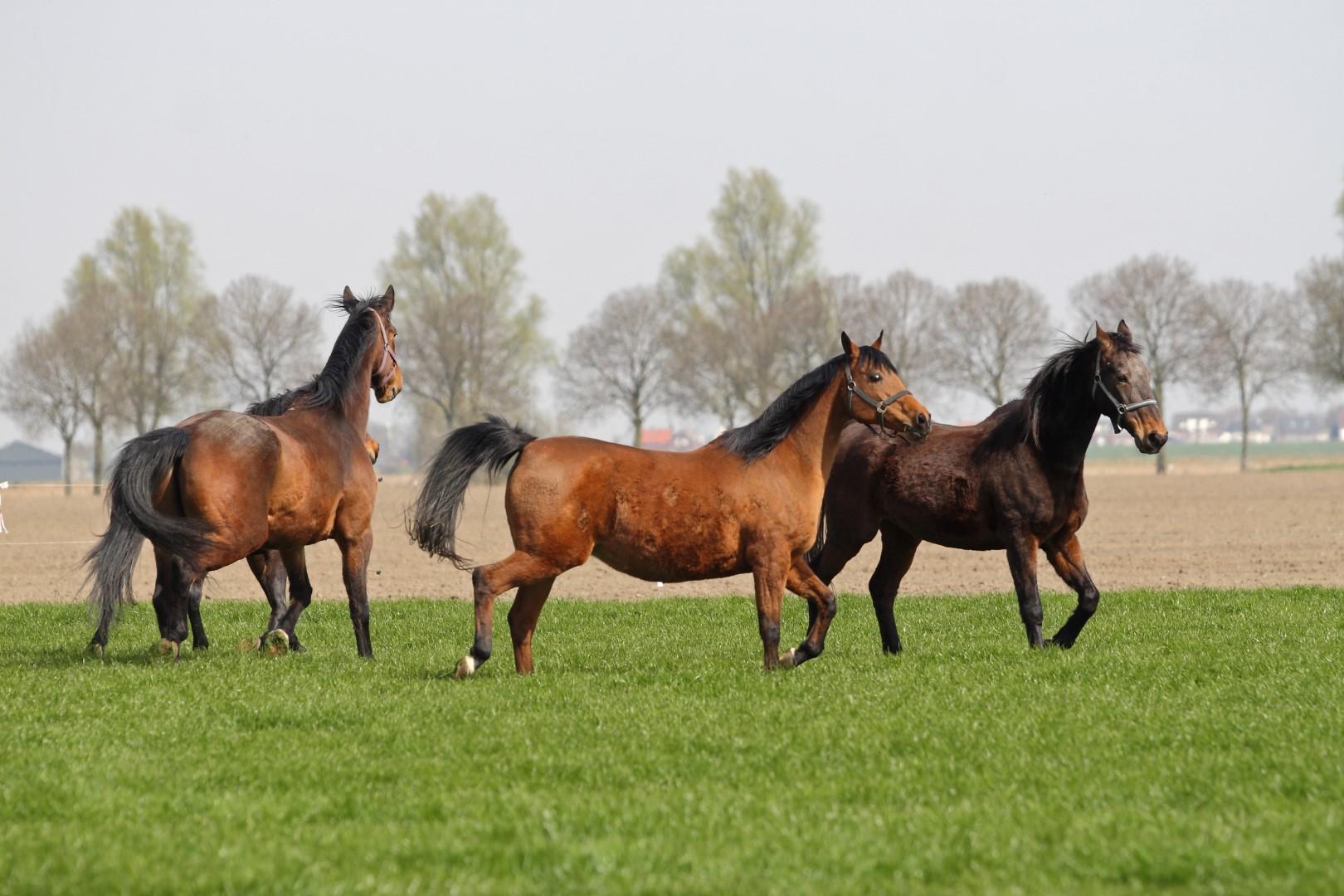 Stichting Manegepaarden Pensioenfonds - Voor het eerst op de wei na de winter