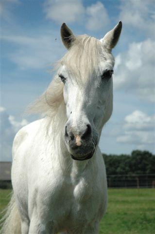 Stichting Manegepaarden Pensioenfonds - In Memoriam 'Lucky'