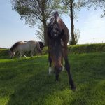 Levi Levi is geboren op 07-03-1993. De adoptanten van Levi zijn: H. Donk A.H. Krieger Jan Willem Huizinga C.P.J.M. Maat F. Dekker K. Maat A.L. van Erp L.A. van Erp