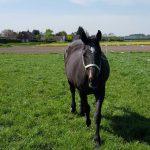 Luna Luna is geboren op 14-02-1995. Luna is geadopteerd door Carola Poot.