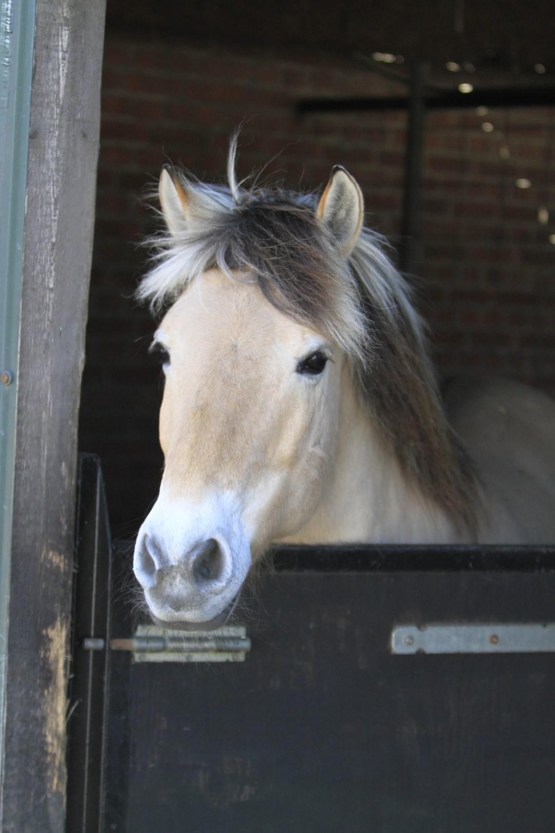 Stichting Manegepaarden Pensioenfonds - Odin