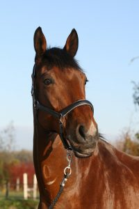 Stichting Manegepaarden Pensioenfonds - Quaranta