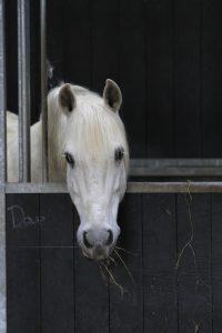 Stichting Manegepaarden Pensioenfonds - Dave