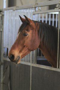 Stichting Manegepaarden Pensioenfonds - Remember